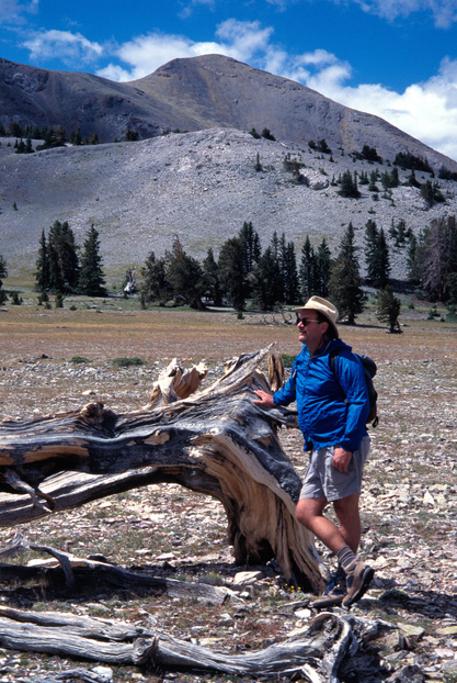 Downed bristlecone pine on The Table, Mount Moriah Wilderness