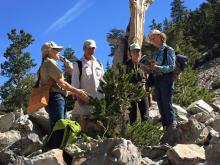 Artist Miki Harder leading a guided hike and sketch trip to the Bristlecone Grove -NPS Photo
